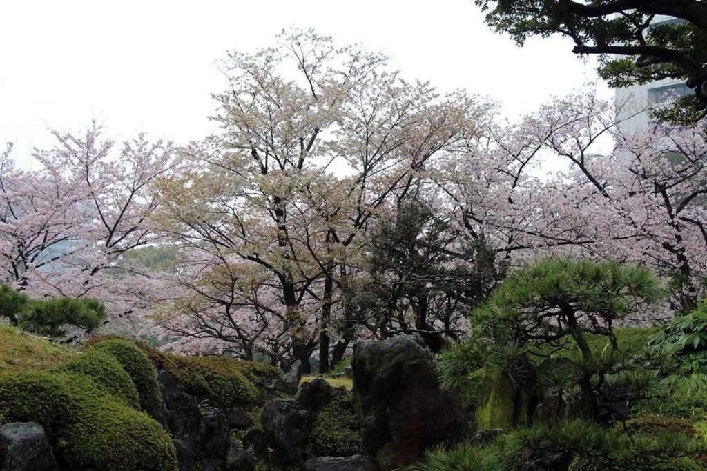 Sakura Tokyo 2016_31