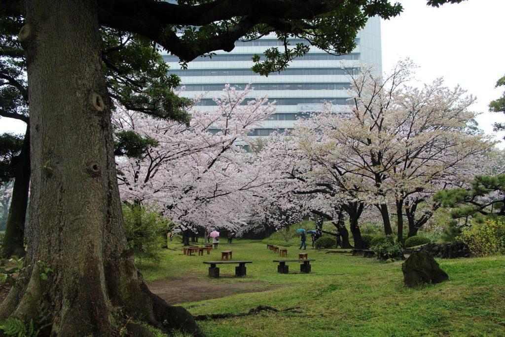 Sakura Tokyo 2016_32