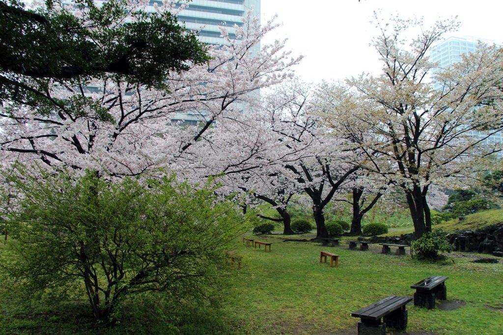 Sakura Tokyo 2016_33