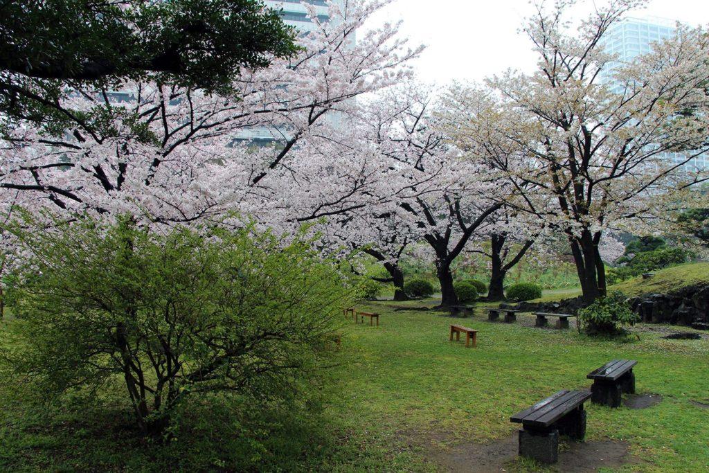 Sakura Tokyo 2016_34