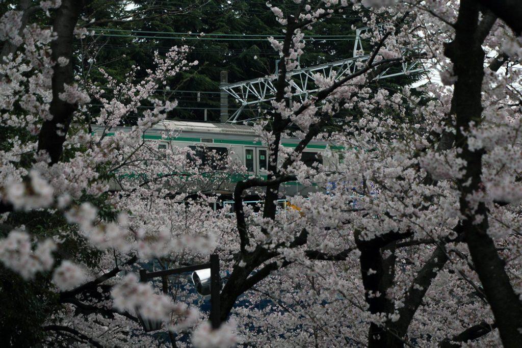 Sakura Tokyo 2016_36
