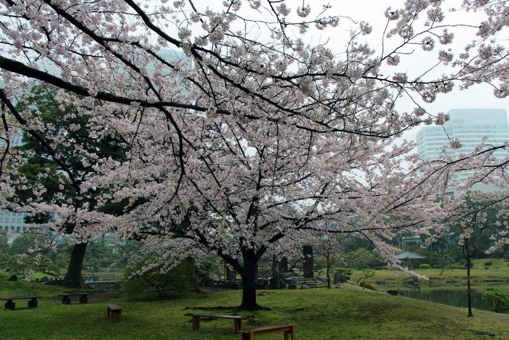 Sakura Tokyo 2016_37