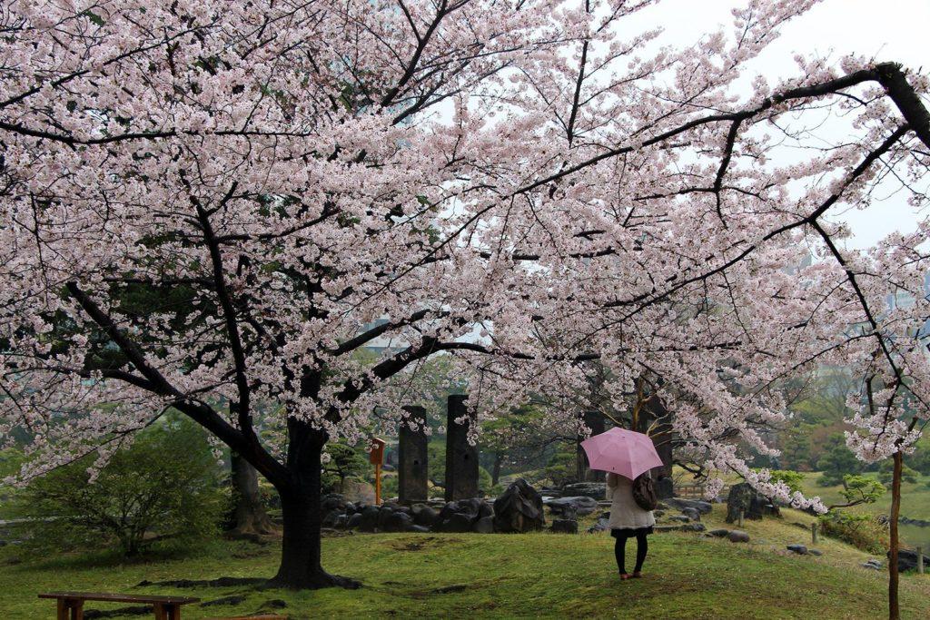Sakura Tokyo 2016_39