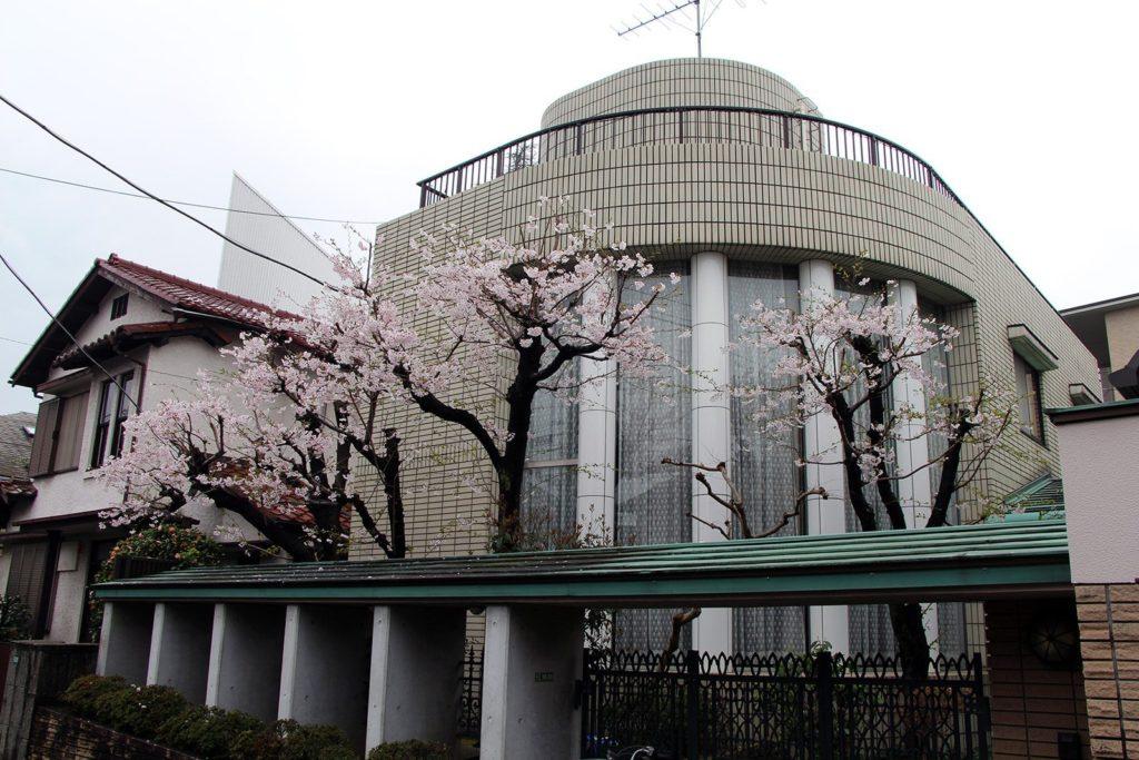 Sakura Tokyo 2016_4