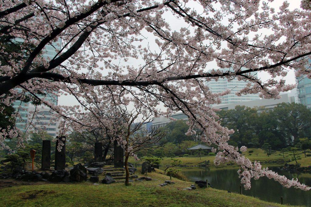 Sakura Tokyo 2016_40