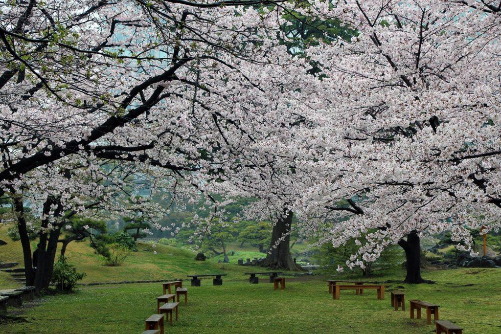 Sakura Tokyo 2016_41