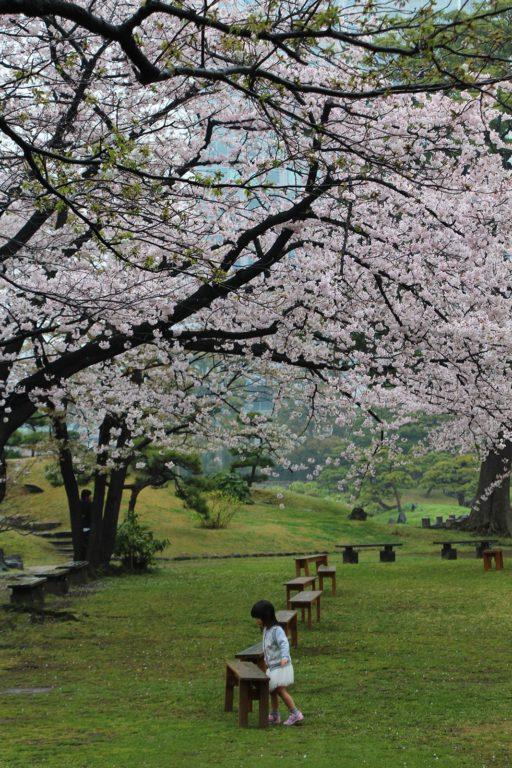 Sakura Tokyo 2016_42