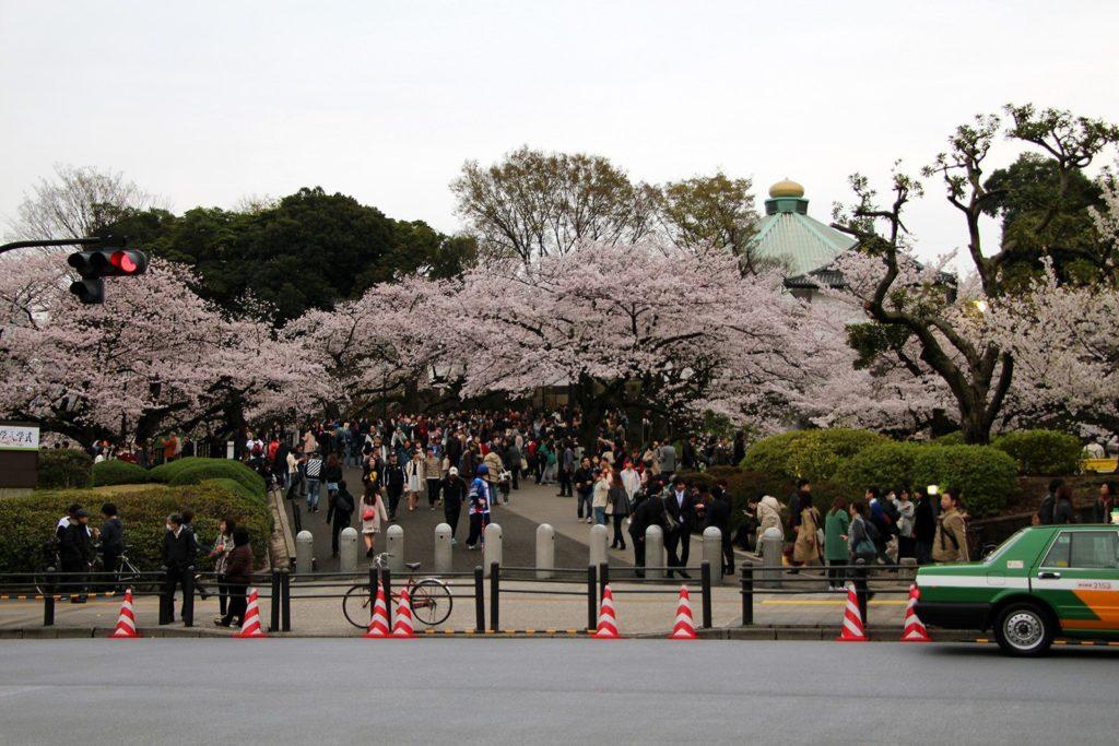 Sakura Tokyo 2016_43