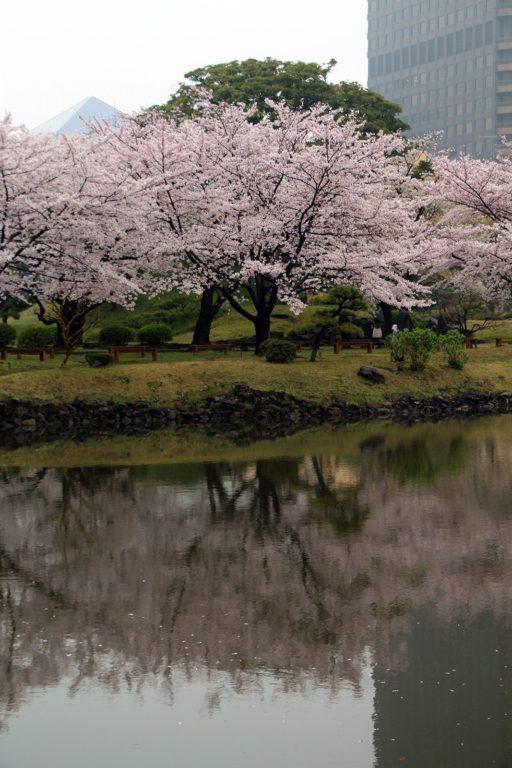 Sakura Tokyo 2016_44