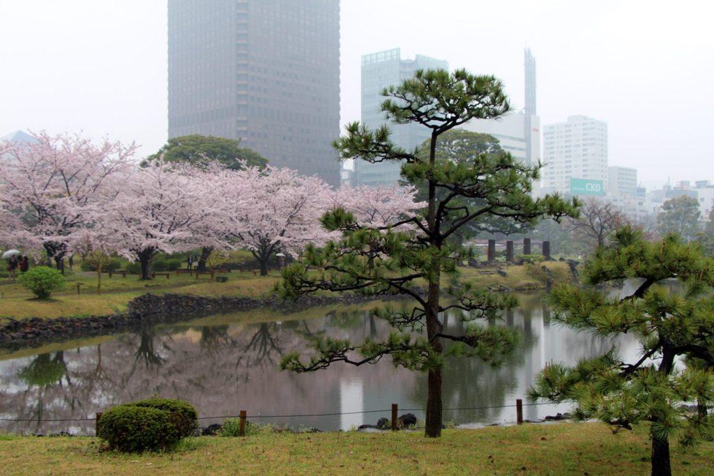 Sakura Tokyo 2016_45