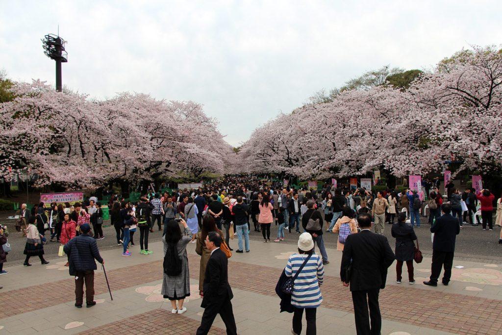 Sakura Tokyo 2016_47