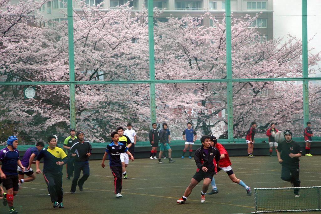 Sakura Tokyo 2016_5