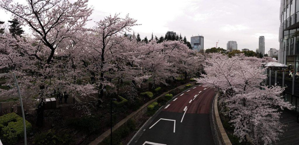 Sakura Tokyo 2016_51