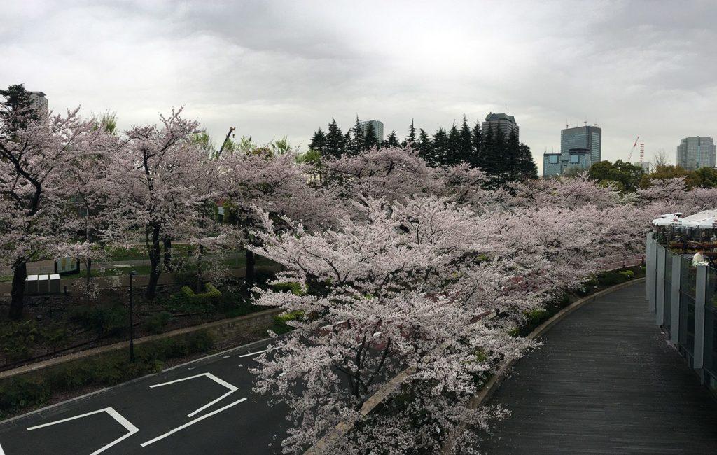 Sakura Tokyo 2016_52