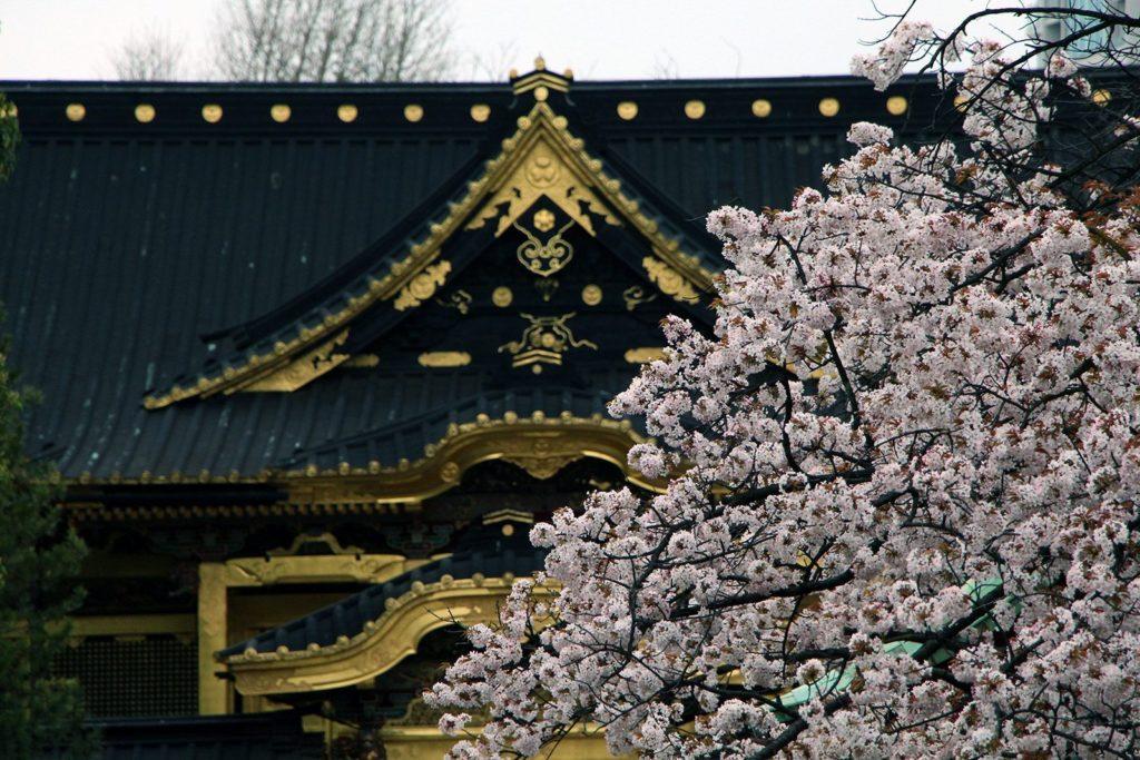 Sakura Tokyo 2016_53