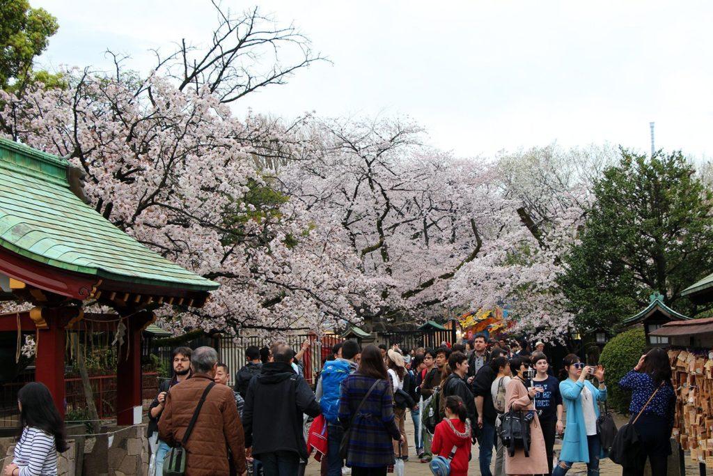 Sakura Tokyo 2016_54