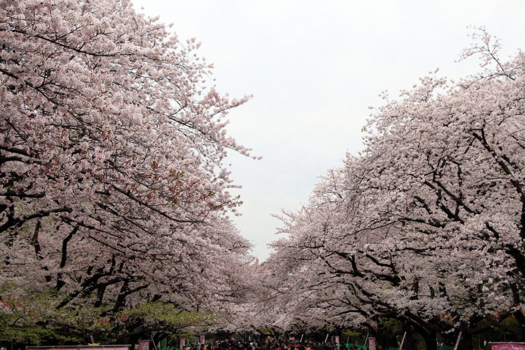 Sakura Tokyo 2016_57