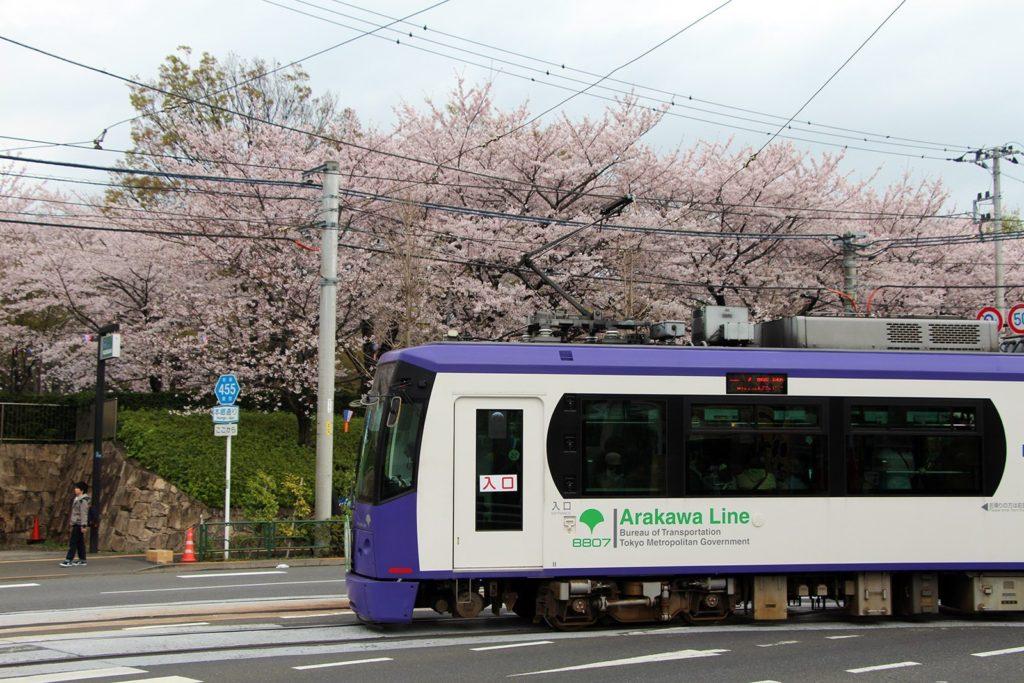 Sakura Tokyo 2016_6