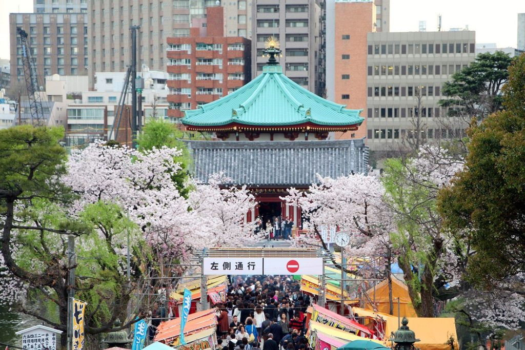 Sakura Tokyo 2016_62