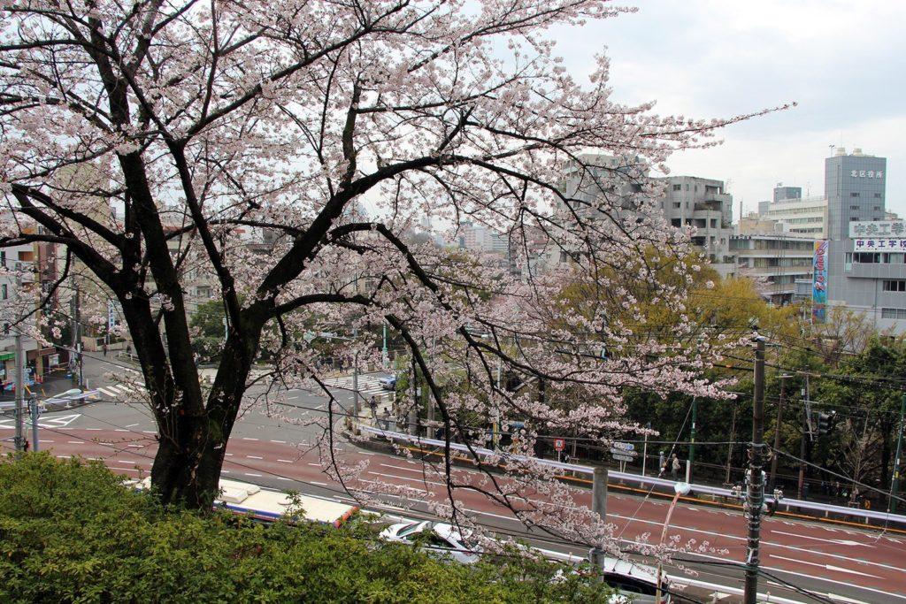 Sakura Tokyo 2016_7
