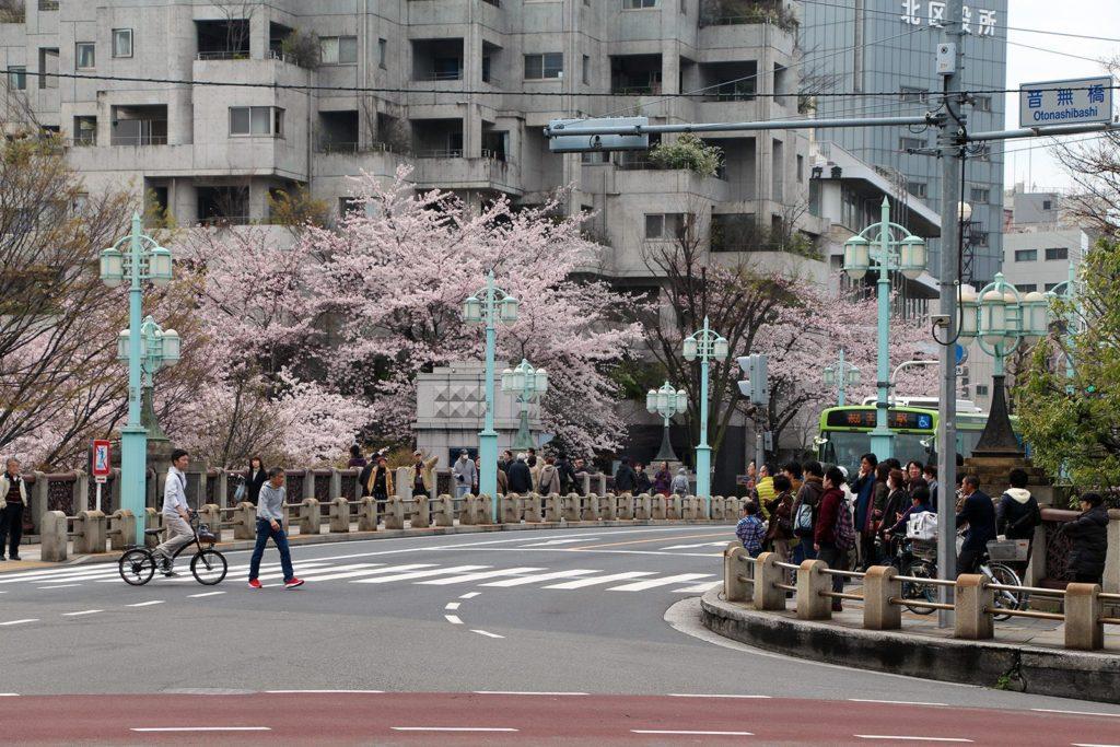 Sakura Tokyo 2016_8