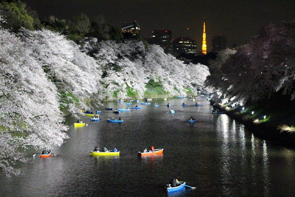 Sakura night Tokyo 2016_10