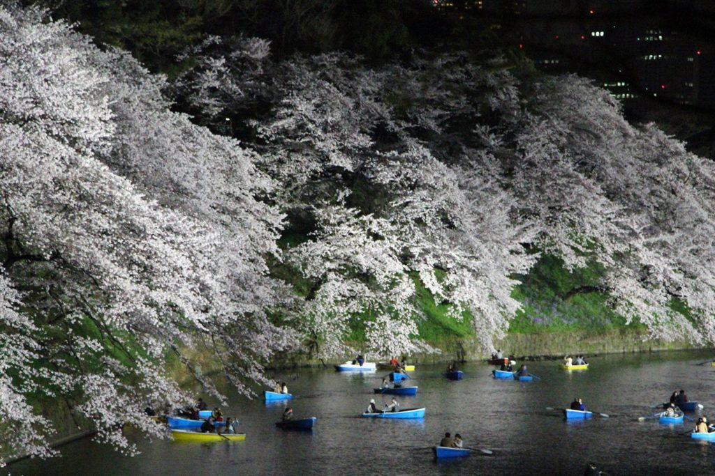 Sakura night Tokyo 2016_11