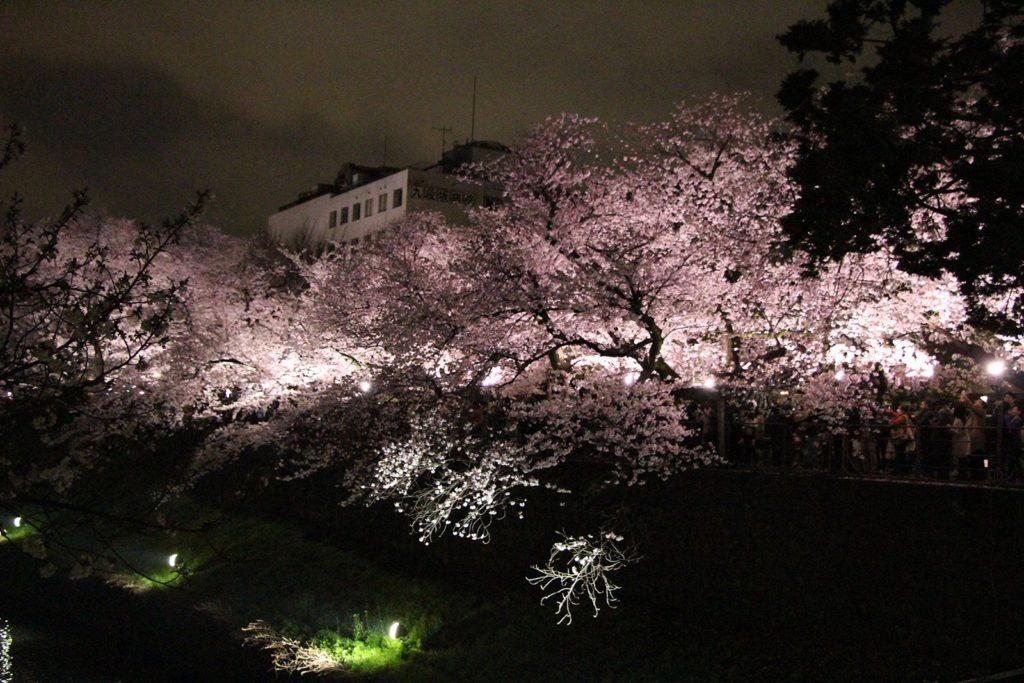 Sakura night Tokyo 2016_12