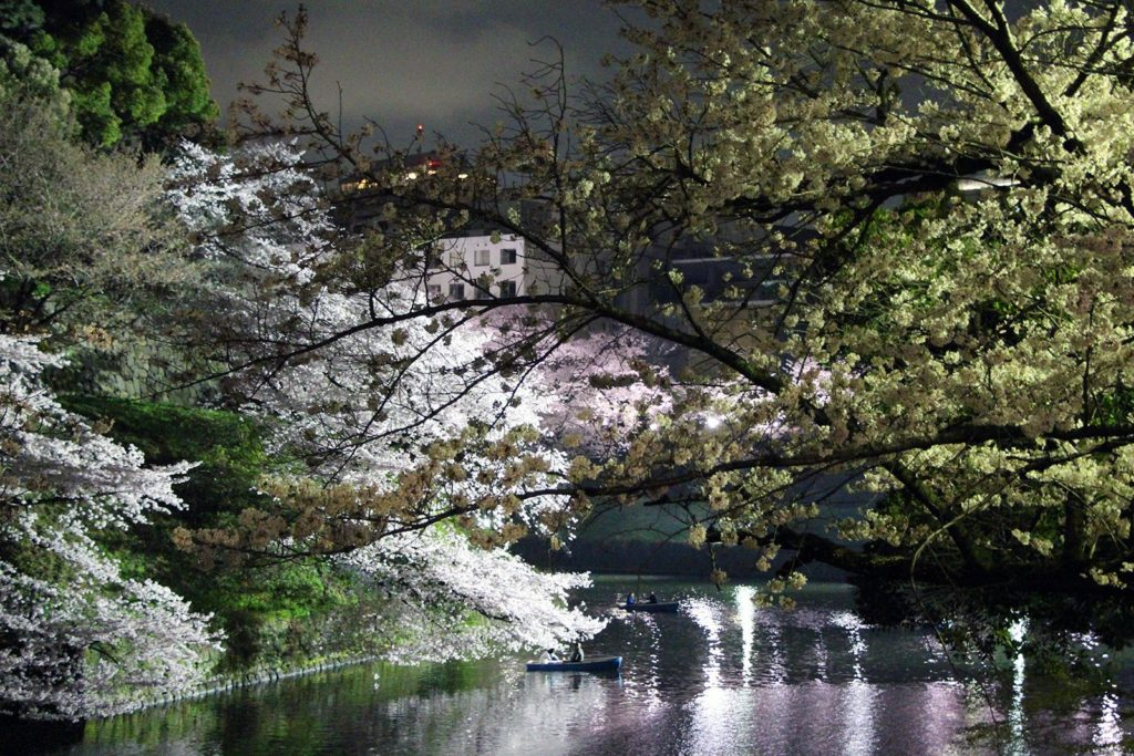 Sakura night Tokyo 2016_14