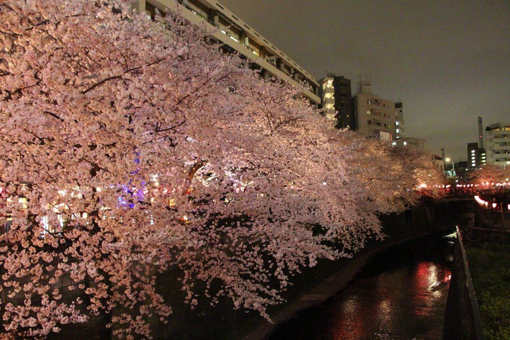 Sakura night Tokyo 2016_16