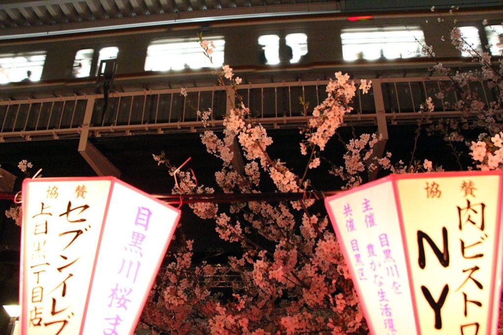 Sakura night Tokyo 2016_17