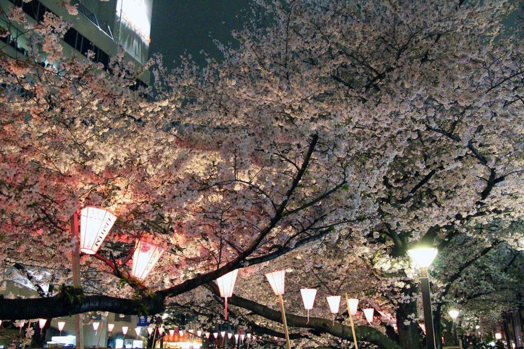 Sakura night Tokyo 2016_19