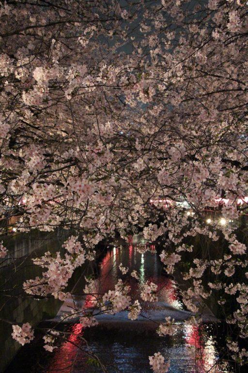 Sakura night Tokyo 2016_20