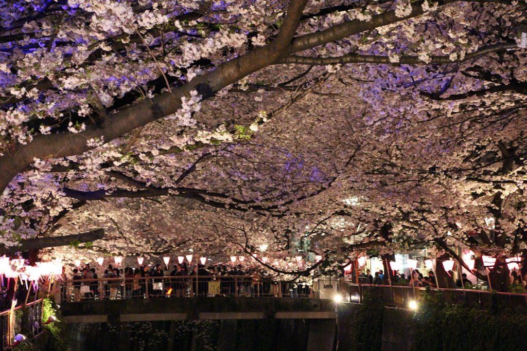 Sakura night Tokyo 2016_22