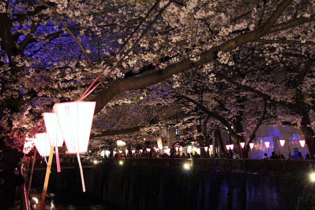 Sakura night Tokyo 2016_23