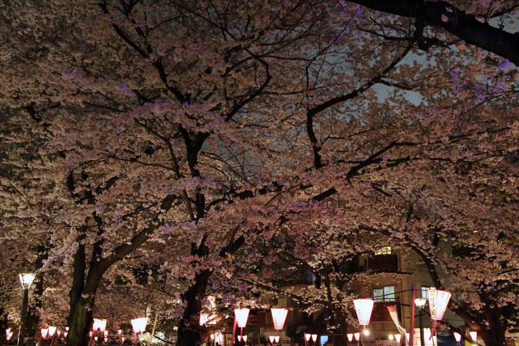 Sakura night Tokyo 2016_25