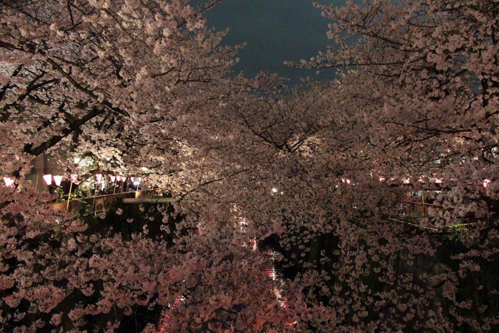 Sakura night Tokyo 2016_26