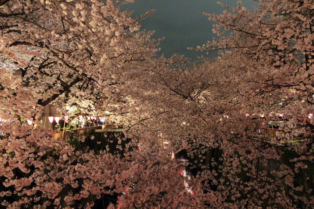 Sakura night Tokyo 2016_27