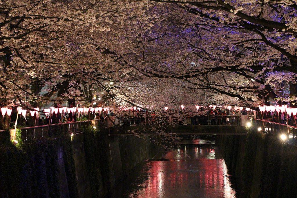 Sakura night Tokyo 2016_28