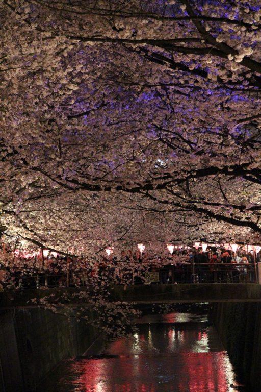Sakura night Tokyo 2016_29