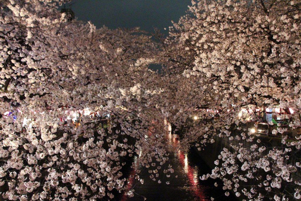 Sakura night Tokyo 2016_33