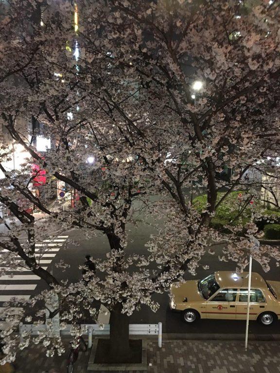 Sakura night Tokyo 2016_34