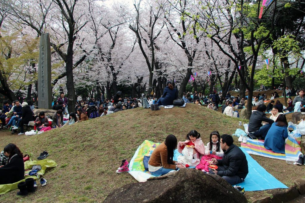 Sakura ohanami Tokyo 2016_12