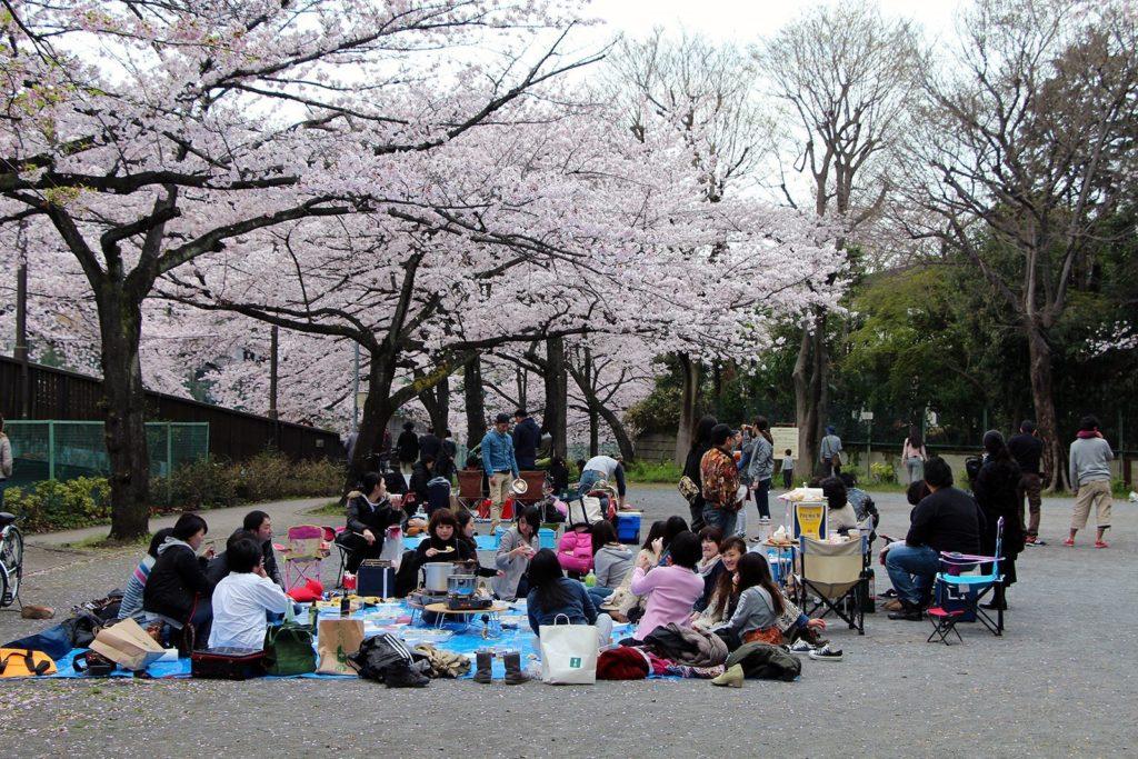 Sakura ohanami Tokyo 2016_17