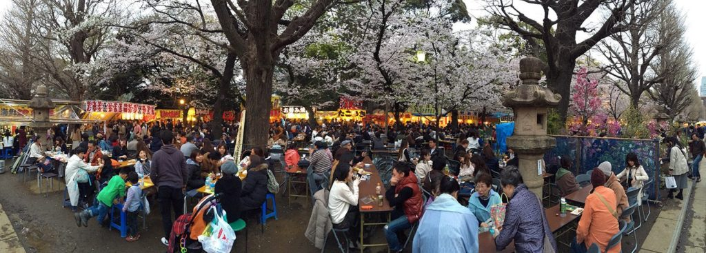 Sakura ohanami Tokyo 2016_5