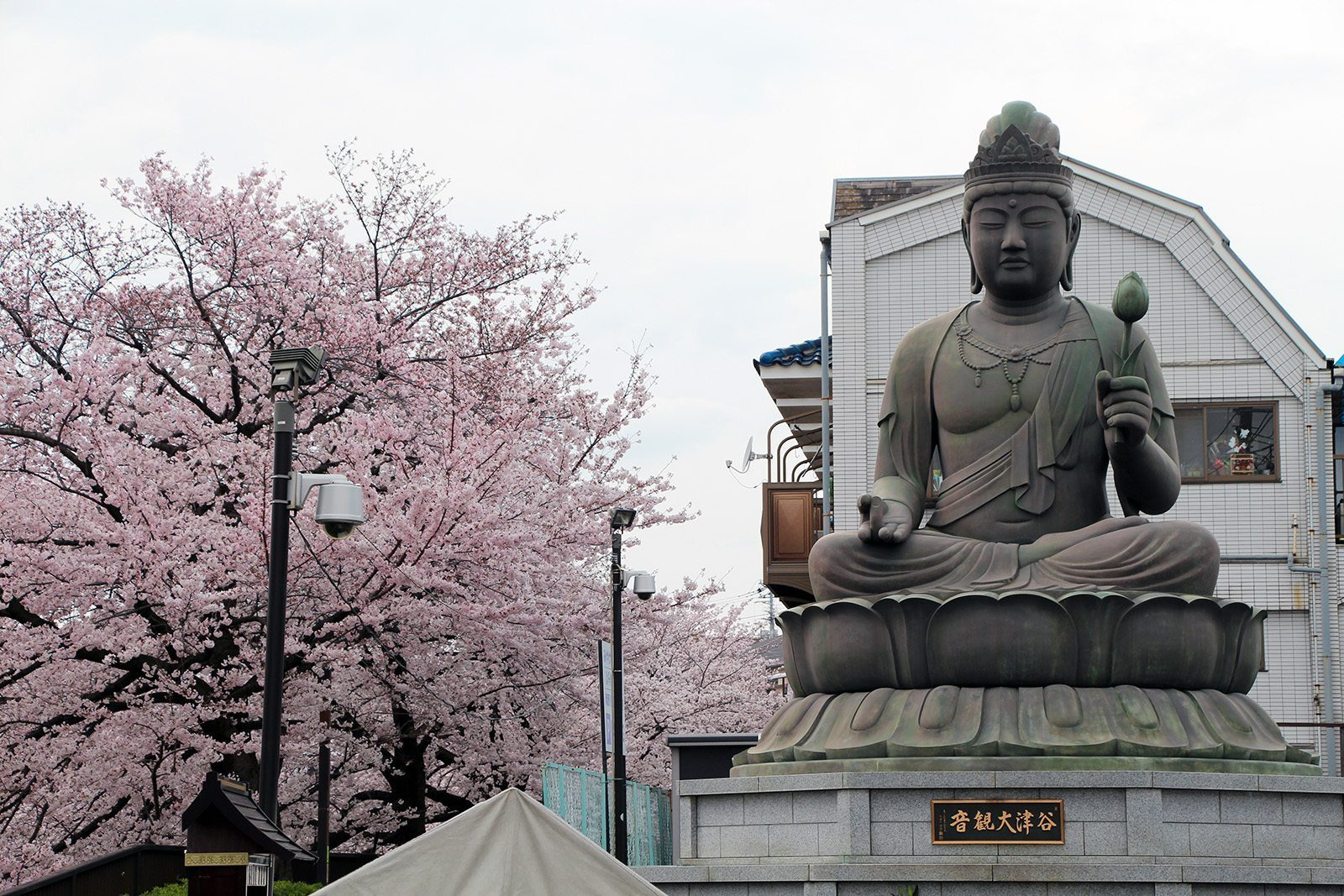Shakujigawa Tokyo Sakura 2016_1