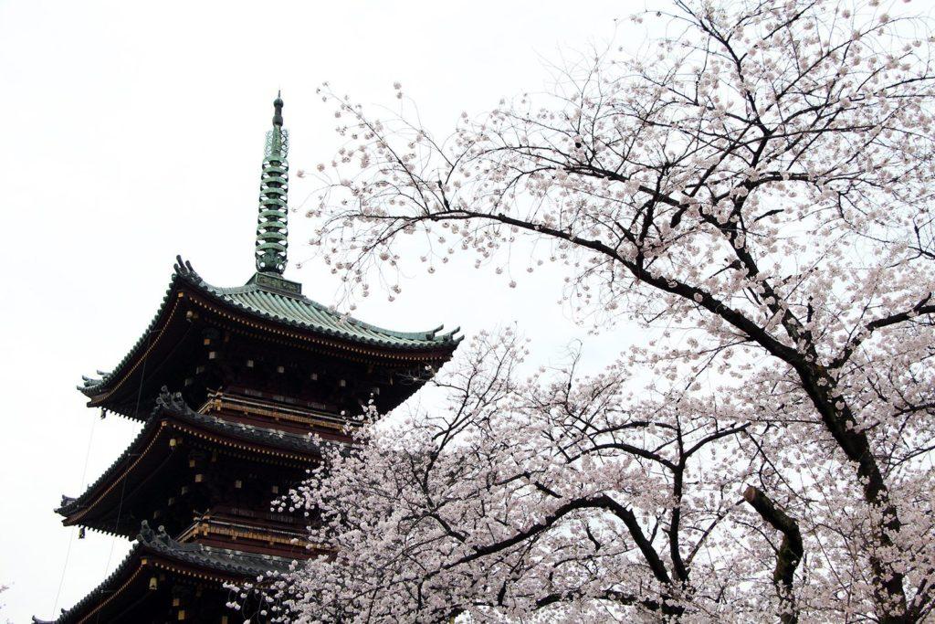 Ueno Toshogu Tokyo Sakura 2016_1