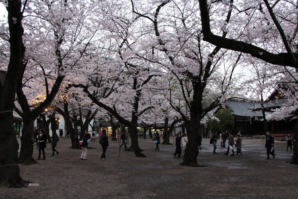 Yasukuni-jinja Tokyo Sakura 2016_12