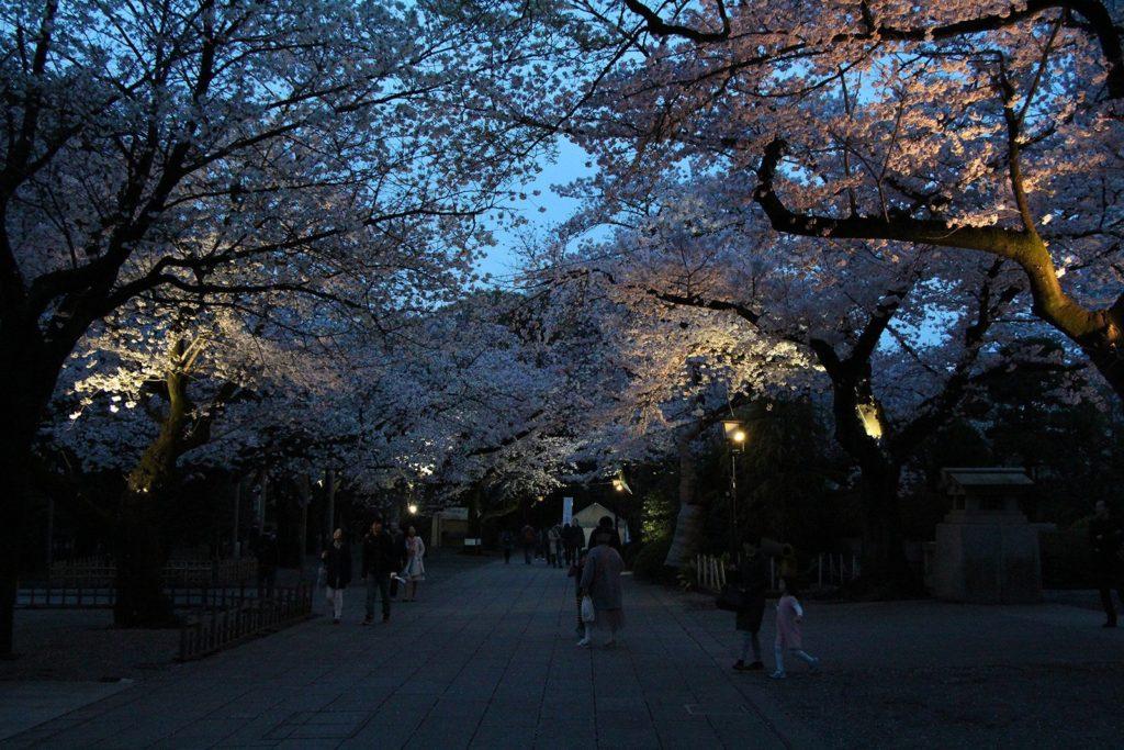 Yasukuni-jinja Tokyo Sakura 2016_20