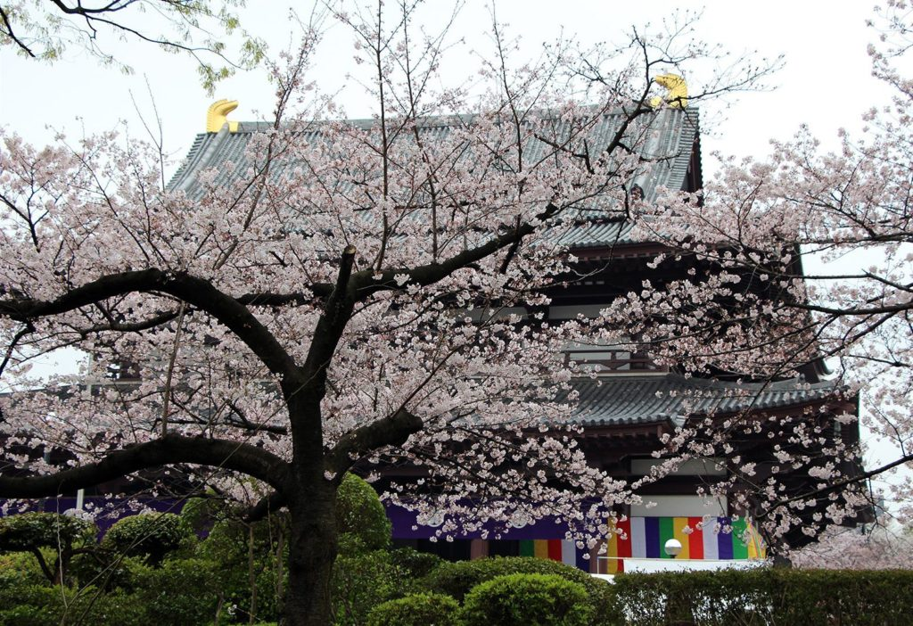 Zojo-ji Tokyo Sakura 2016_10